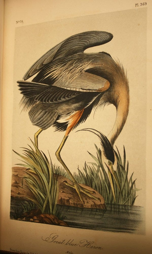 Lot 145: 10 vol. Audubon Octavo Birds of America, Quadruped